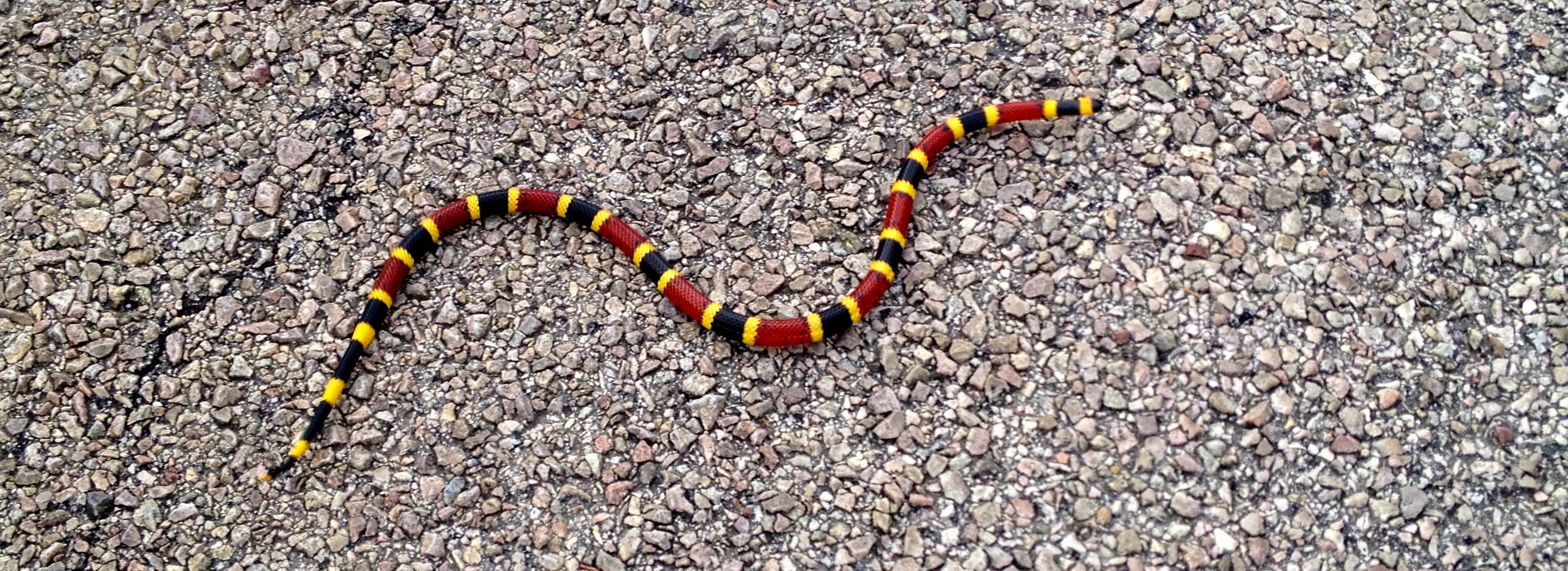 May 22, 2014: Red and yellow…you know   Mike Leggett Outdoors
